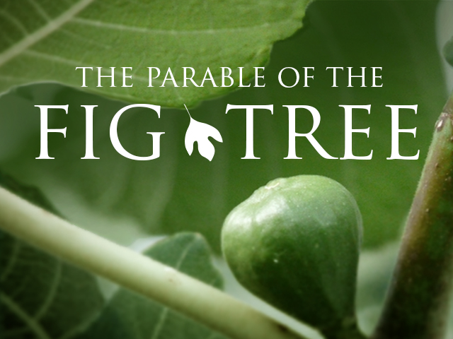 The Shrivelled FigTree